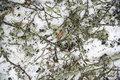 Free Broken Branches Background Stock Image - 9293631