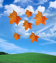Free Autumn Leaves Stock Image - 9296881