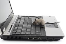 Free Laptop With Toy Mouse Stock Photography - 9290482