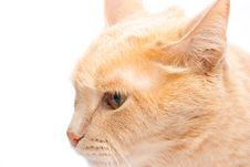 Free Cat Royalty Free Stock Images - 9291229