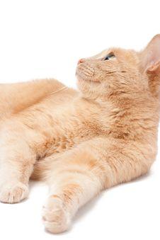 Free Cat Stock Photos - 9291243