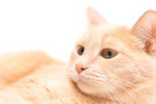 Free Cat Royalty Free Stock Image - 9291246