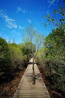 Free Mangrove Forest Royalty Free Stock Photo - 9292465