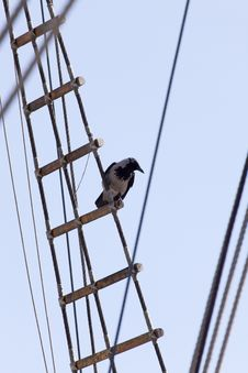 Free Crow Standin On Rope Ladder Of An Old Sailing Ship Stock Images - 9293904
