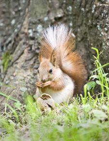 Free Squirrel Stock Photography - 9294002