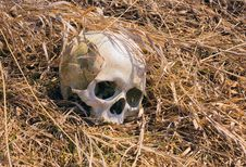 Free Skull In Yellow Grass Royalty Free Stock Images - 9294289