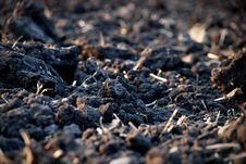 Free Black Earth In The Field Stock Image - 9294801