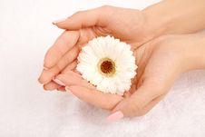 Free Beautiful Handful Stock Photos - 9294983