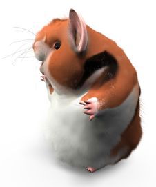 Free Hamster Happy Pose Stock Photo - 9295030