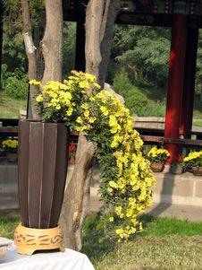 Free Flowers Tree Stock Photography - 9295042