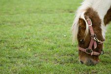 Free Pony Stock Photo - 9297410
