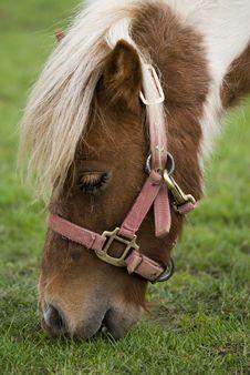 Free Pony Royalty Free Stock Photos - 9297548