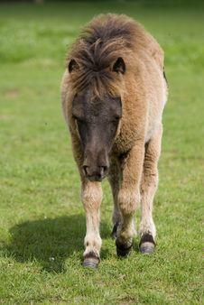 Free Pony Stock Photos - 9297583