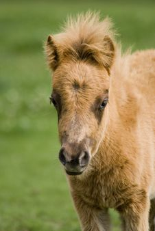 Free Pony Stock Photography - 9297602