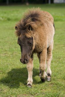 Free Pony Royalty Free Stock Photography - 9297627
