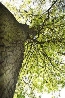 Free Tree Stock Image - 9297631