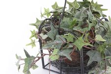 Free Green Houseplant Stock Images - 9298224