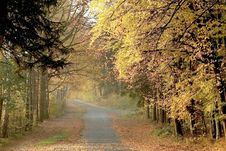 Free Autumn Forest Road With Early Morning Sun Rays Stock Images - 9299734