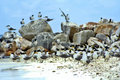 Free Beach Of Birds Stock Images - 931944