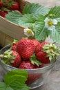 Free Juicy Strawberry Royalty Free Stock Photos - 936258