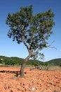 Free Single Tree Stock Image - 937891
