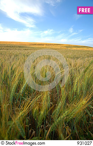 Free Agricultural Landscape Royalty Free Stock Photography - 931027