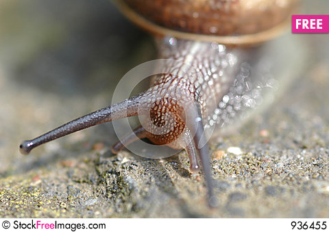 Free Snail Royalty Free Stock Photo - 936455