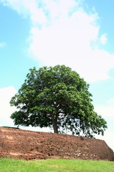 Free Lonely  Tree Royalty Free Stock Photos - 930328