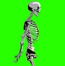 Free Bone 212 Stock Images - 930654