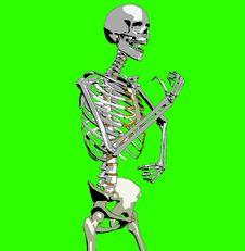 Free Bone 213 Royalty Free Stock Photography - 930657