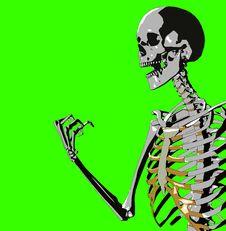 Free Bone 220 Stock Photos - 930663