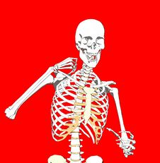 Free Bone 243 Royalty Free Stock Image - 930686