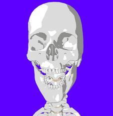 Free Skull 10 Royalty Free Stock Image - 930706
