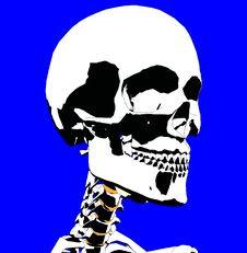 Free Skull 8 Stock Photo - 930710
