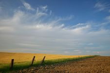 Free Agricultural Landscape Stock Image - 930901