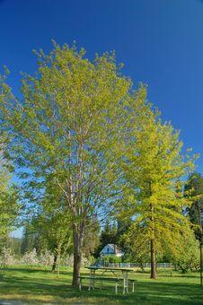 Free Verdant Spring Landscape Stock Images - 931124