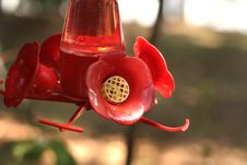 Free Red Feeder Royalty Free Stock Photos - 931148