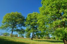Free Verdant Spring Landscape Stock Photos - 931153