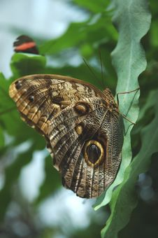 Free Owl Butterfly Stock Photos - 931523