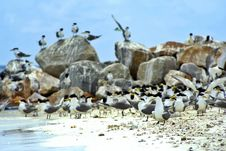 Free Beach Of Birds Stock Images - 931944