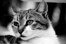 Free Cat Royalty Free Stock Photos - 932418