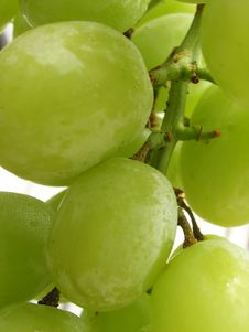Free Bunch Of Grapes Stock Photos - 932563