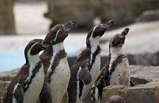 Free Penguin Tea Time Stock Photo - 932640