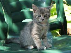Free Small Cat Royalty Free Stock Photos - 933898