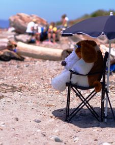 Free Woof At The Beach (left View) Royalty Free Stock Photography - 934337