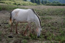 Free Horse_01 Royalty Free Stock Image - 934716
