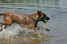 Free Dog Playing With Ball Royalty Free Stock Image - 935386