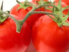 Free Tomatoes Temptation 2 Royalty Free Stock Photo - 935925