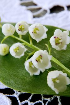 Spring Flower A Lily Of The Valley Royalty Free Stock Images