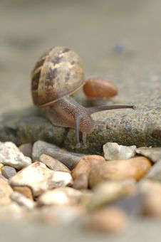Free Snail Royalty Free Stock Image - 936456